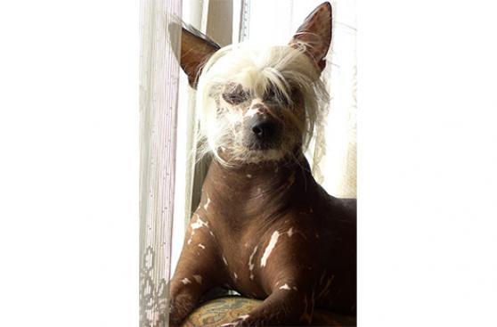 La piel de tu mascota también sufre con el sol