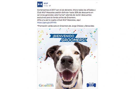 Crece la red de ayuda para perros sin hogar