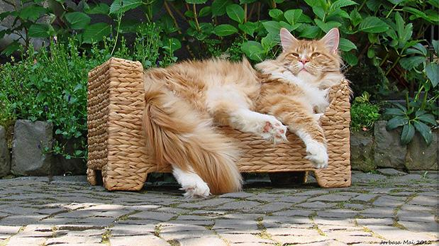Cómo mantener a tu gato fresco en verano