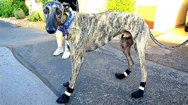 ¿Cómo proteger las patas de tu perro en días calientes?