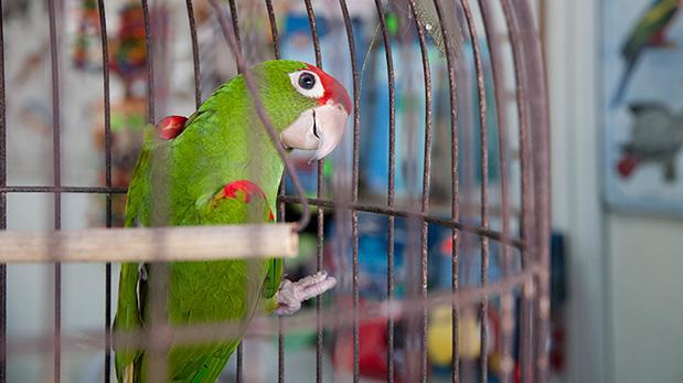 El verano puede ser mortal para tus aves