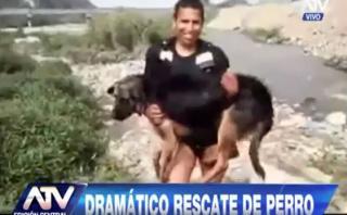 Chosica: serenos rescataron a un perro atrapado en el río Rímac