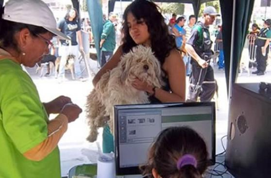 Ventanilla apuesta por registro y control natal de mascotas