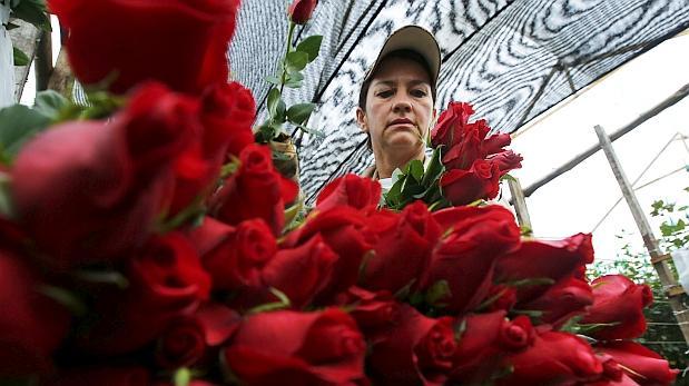 San Valentín: ¿Por qué Colombia revisa las rosas que exporta?