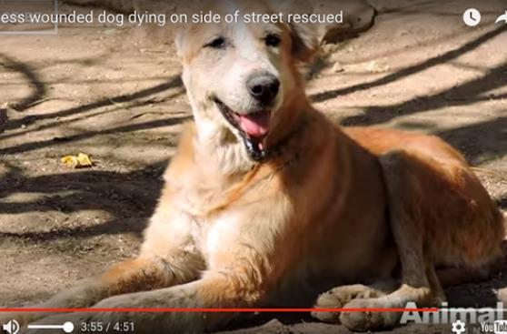 Rescate de un perro que fue abandonado a morir