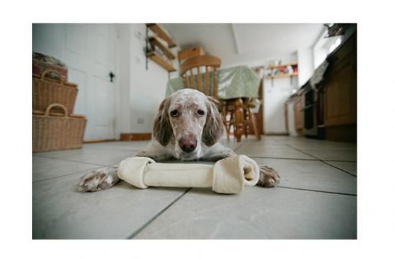 ¿Qué hacer cuando tu perro vomita bilis?