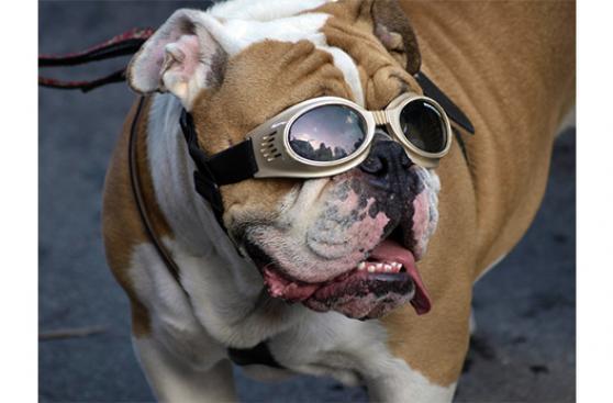 ¿Cómo afecta el verano los ojos de tu perro?