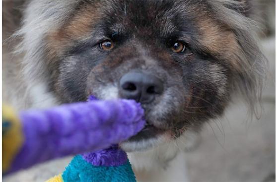Cómo lidiar con perros que muerden lo que no deben