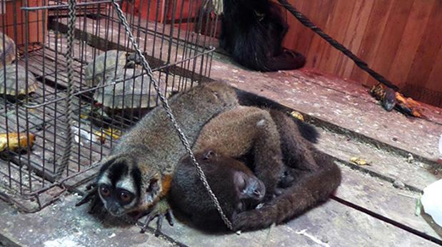 Tráfico de fauna silvestre en estado de emergencia