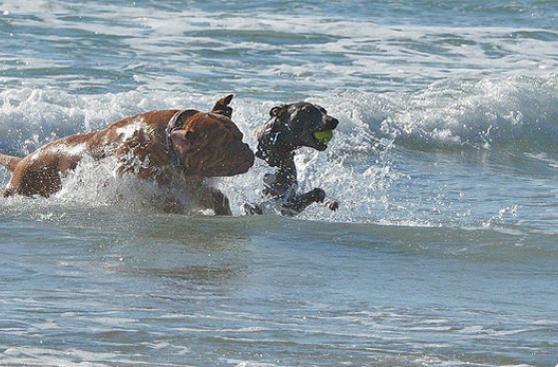 El verano aumenta el riesgo de otitis en los perros