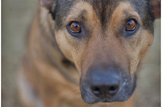Ojo con ignorar los signos neurológicos en tu mascota