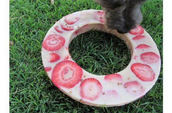 Así tendrás a tu perro contento e hidratado en verano