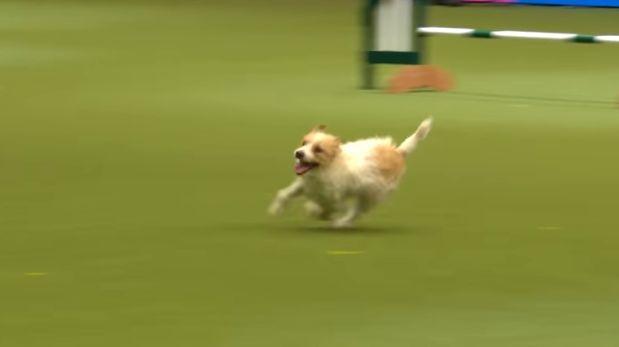 YouTube: la divertida carrera de un perro se volvió viral