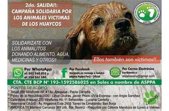 Así puedes ayudar a animales víctimas de huaicos