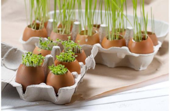 Seis usos que le puedes dar a la cáscara de huevo en casa