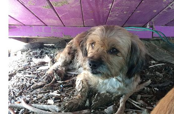 ¿Por qué adoptar a un animal víctima de un huaico?