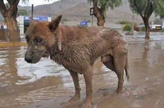 Tu mascota y tú ante una emergencia