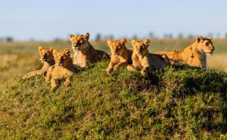 ¿Safari en África?: Conoce cuánto te costará cumplir este sueño