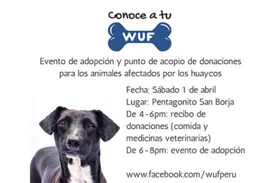 Campaña dará en adopción animales víctimas de huaicos