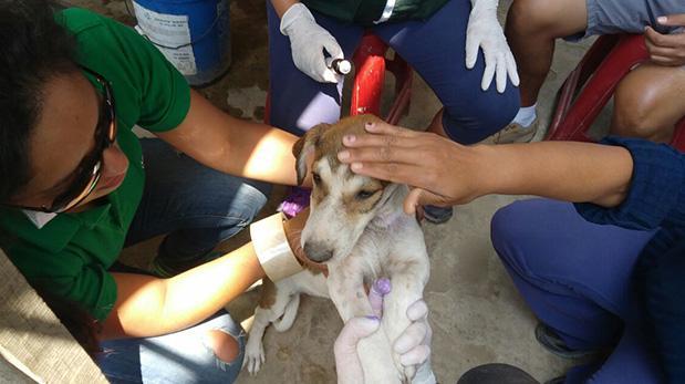 Trabajo en equipo se traduce en ayuda a animales damnificados