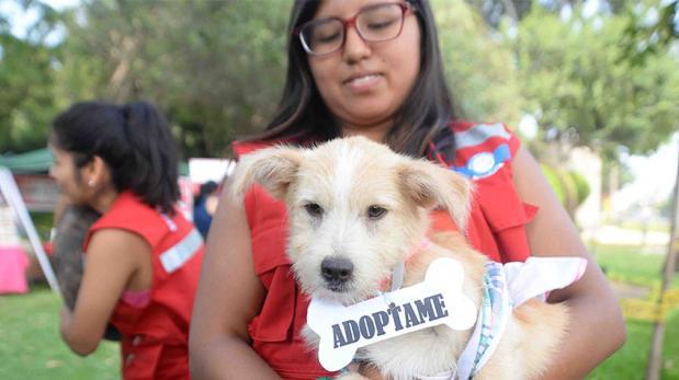 Animales víctimas de huaicos fueron adoptados