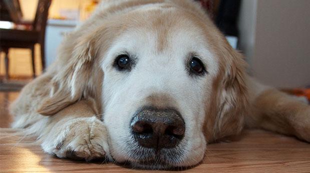 ¿Qué medicina para humanos no debe tomar tu mascota?