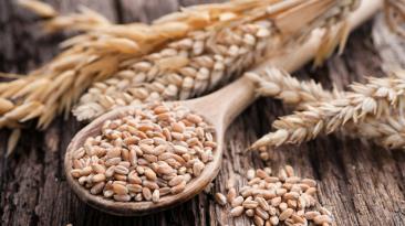 ¿Sufres de estrés? Consume trigo y aprovecha sus propiedades