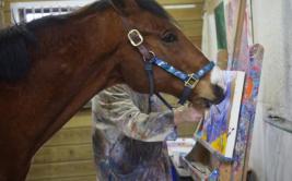 Metro, el caballo que financia su tratamiento médico pintando