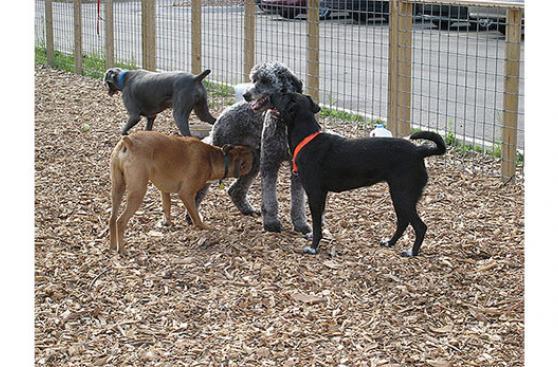 Cuidado con socializar a tu perro en estos lugares