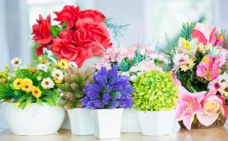 Dinos qué deseas y te diremos qué plantas debes tener en casa