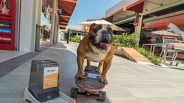 Mall en Lurín le abre sus puertas a las mascotas