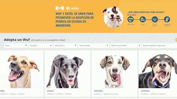 Página de venta de perros resultó tener fin social