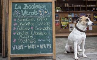 Pet Friendly: 10 lugares de Lima para disfrutar con tu mascota