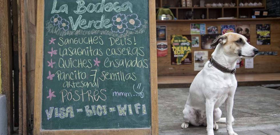 10 lugares de Lima para disfrutar con tu mascota