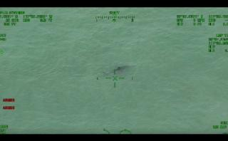 Advierten a bañistas por la presencia de 15 tiburones blancos