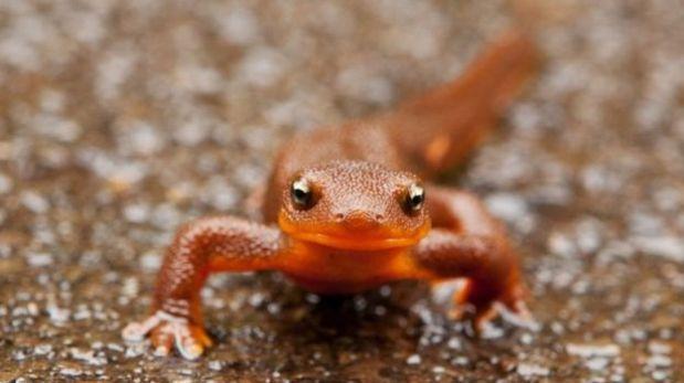 [BBC] Los animales que pueden sobrevivir a que se los coman