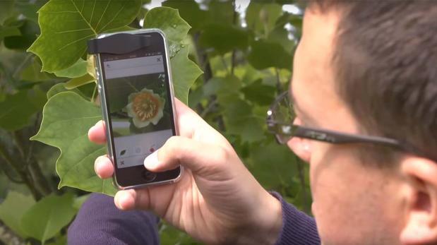 PlantNet: Conoce el 'shazam' para identificar plantas