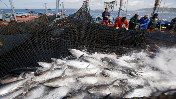 Industria atunera: Buscan declararla de interés nacional