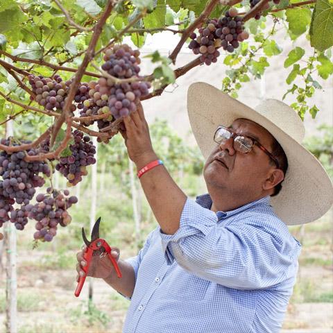 José Moquillaza alquiló las instalaciones de una bodega para preparar un pisco que la industria no hubiera esperado. Lo llamó Inquebrantable.