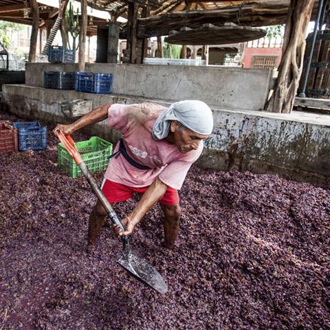 En el 2012, con su socio Camilo Quintana, inició el proyecto de vinos Quebrada de Ihuanco (con una marca que lleva el mismo nombre y con otra llamada Albita de Ihuanco).