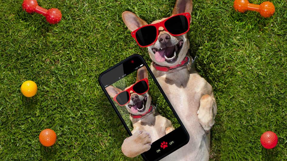 Nuestras mascotas merecen todo nuestro cuidado y nada como estas apps para que pases junto a ellas un momento inolvidable.