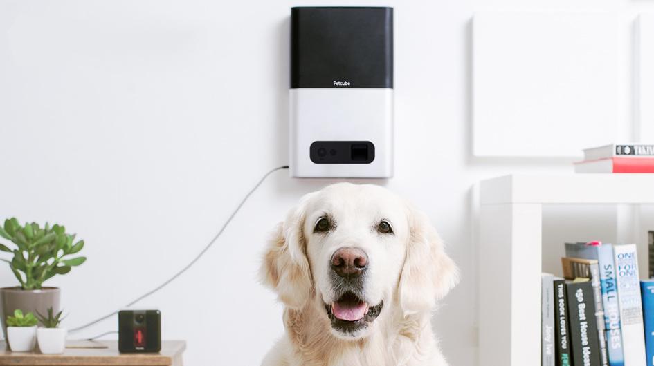 Petcube. A US$149, este cubo integra una cámara HD, micrófono y altavoces. Permite que sepas todo de tu engreído cuando sales de casa.