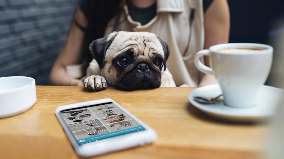 Enciclopedia del Cuidado del Perro. Esta app brinda información de mucha utilidad con secciones son: nuevo cachorro, bienvenido a casa, cuidados básicos, etc.