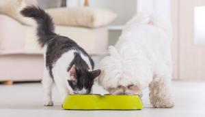 Mascotas: Una guía para darle una alimentación adecuada