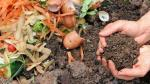 Compost: 4 pasos para aprovechar los residuos orgánicos - Noticias de fruta seca