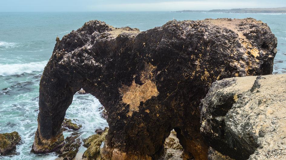 """Marcona. Famosa por la formación rocosa """"Trompa de Elefante"""", que se asemeja a este animal. Posee un área protegida que alberga pingüinos de Humboldt. Los buses tardan siete horas desde Lima."""