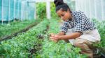 Métodos eficaces para ahorrar agua en los cultivos - Noticias de maca