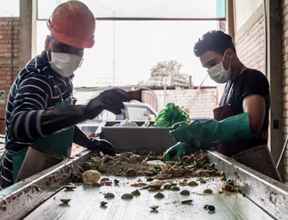 Sinba: la empresa que convierte residuos en comida para cerdos