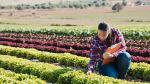 7 consejos para elevar la producción agrícola - Noticias de alimentacion sostenible