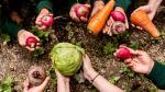 Educación alimentaria: la clave para mejorar la salud - Noticias de cocinar